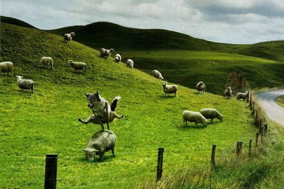 Tip na dlouhé dny a večery: Ovečky a vlci