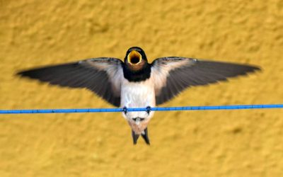 První duben – Mezinárodní den ptactva od roku 1906